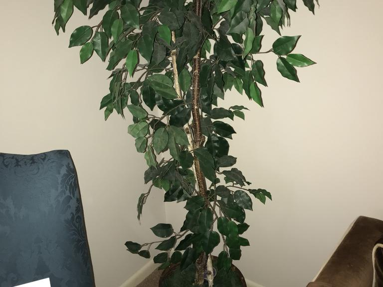 +/-  6 Ft.  Artificial Fig Tree in a Rope/Bamboo Pot